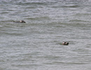 Seal Release - 28th May 2014