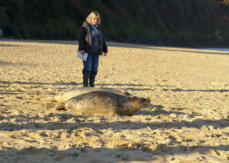 Seal Release - 9th January 2014
