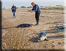 Seal Release - 11th April 2016