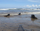 Seal Release - 16th May 2013