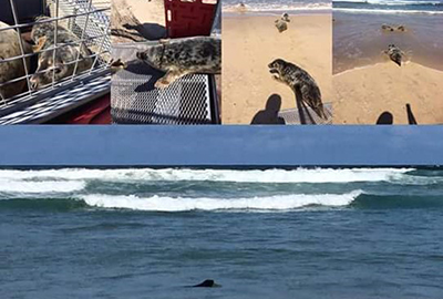 Seal Release - 18th May 2017