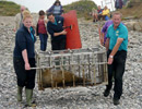 Seal Release - 18th June 2013