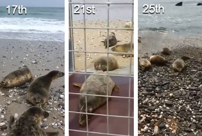 Seal Release on 25th May 2018