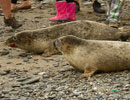 Seal Release - 30th May 2013