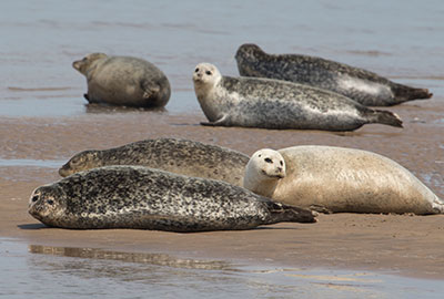 Seals in the Wild on 12th May 2018