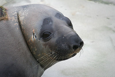 Curator Tamara Cooper celebrates 16 years of seal rescue