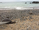 Seal Release - 7th April 2015