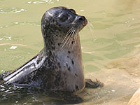 One of our common seals