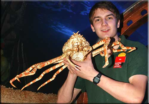 Rob holding our Japanese Spider Crab