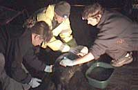 Lesley Jarvis, Tim Bain and Dan Jarvis cleaning oil from Josh on Sue Sayer's terrace - Photo was taken by Sue Sayer on 16-01-2006