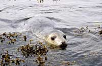 Ledi being released back into the wild in 2004