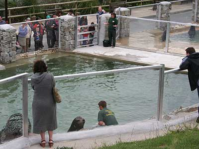 View of the Californian Sea Lions and Fur Seals enclosures