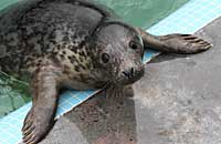 Photo of Mite was taken on 30th of December 2005 in the convalescent pool by Joyce
