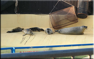 Seal Pups resting on the side