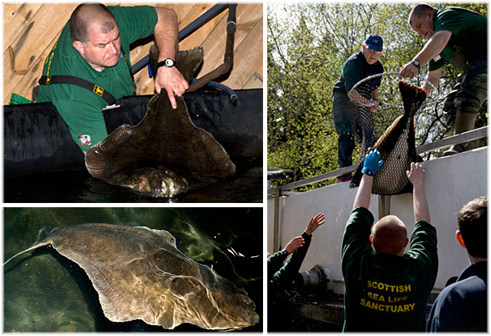 New Giant Halibut arrived in May 2010