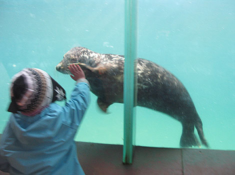 Sean, a rescued seal pup for 2008/9, saying hello to a young visitor!