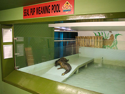 Seal Pups Weaning Pool in the hospital