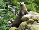Sula and Fingal, North American Otter