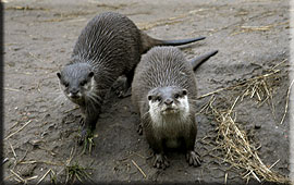 Our Otters