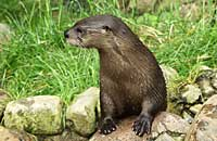 One of our Otters