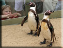 Penguins - Joepi and Jess