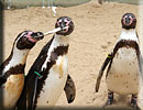 Penguins - Jess, Joepi and Charlie