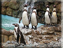 Penguins - (l-r) Joepi, Beau, Harvey, Charlie and Jess