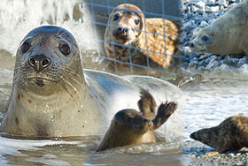 Seal Release on 16th June 2010
