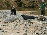 Seals being released back into the wild with Rachael and Claire in the background - Photo was taken by Simon Bone