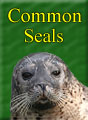 Common Seals Residents