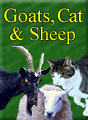 Goats, Sheep and Cat