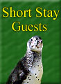 Short Stay Guests