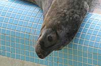 Rimmer in the convalescence pool - photo was taken on 31st March 2007
