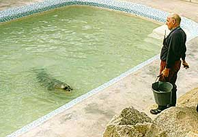 [Ken feeding one of our resident seals]