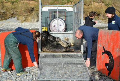 Seal Release on 8th February 2013