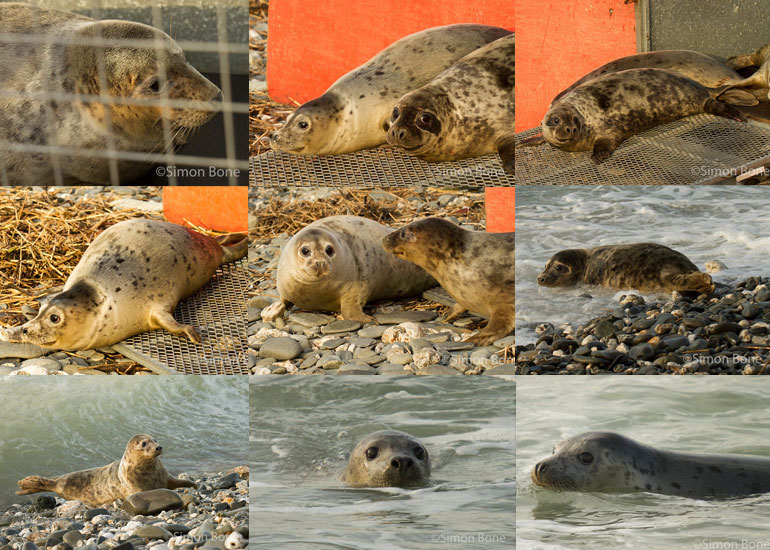 Seal Release - 11th December 2012