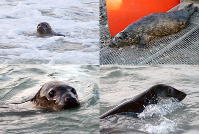 Seal Release on 12th March 2013
