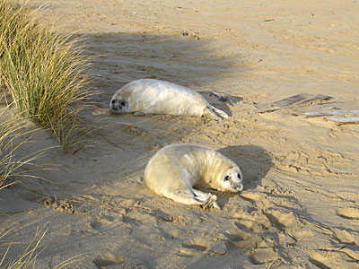 Two Pups on beach