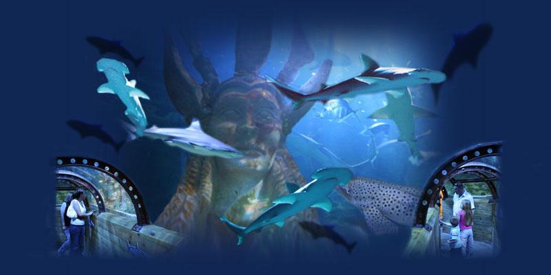 Shark Lagoon picture 4