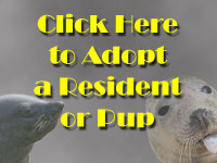 Sponsor A Seal Pup or Resident