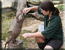 Hollie is doing enrichment training with one of the otters
