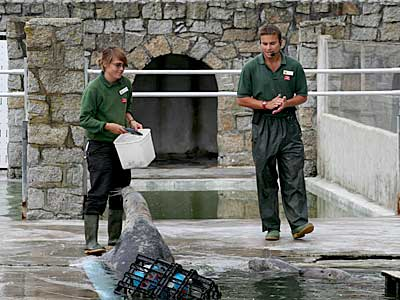 Dan giving a seal talk whilst Jo, one of our volunteers, feeds the seal residents in the convalescent pool
