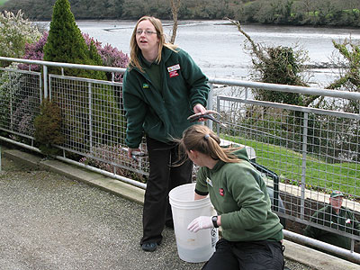 Rachael helps one of the Animal Care Team's volunteers with feeding the seals in the convalescent pool
