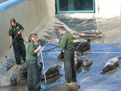 Amy, Clare and Dan (part of the Animal Care Team) cleaning the convalescence pool